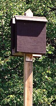 photo of bat box, Ojibway Park
