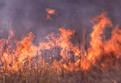 prescribed burn at Ojibway prairie