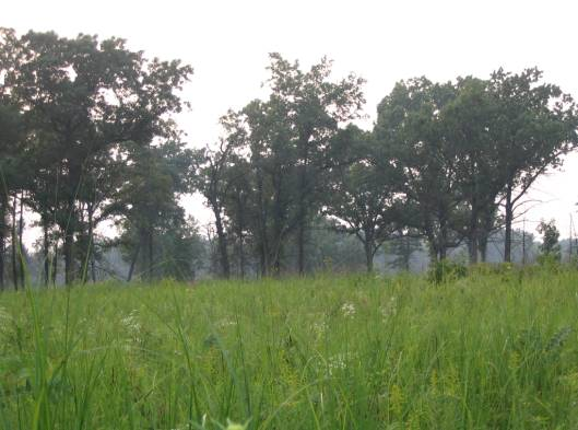 wet prairie meadow